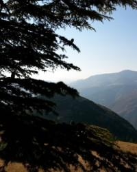 Yavşan Yaylası (Sır Barajı-Karadere-Hartlap Üstü)