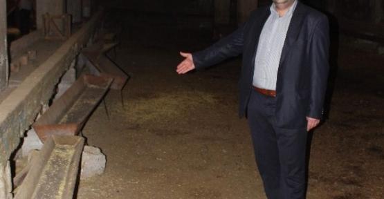 Gaziantep'te 20 Koyun Çalındı
