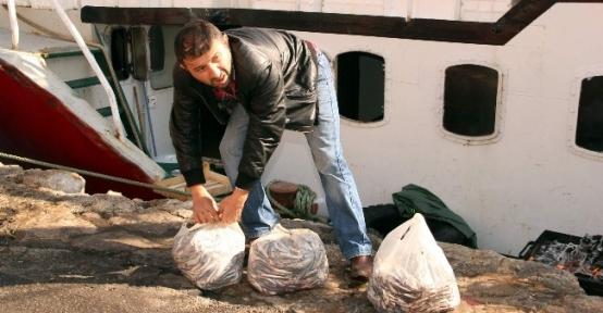 Karadeniz'de Hamsi Bolluğu