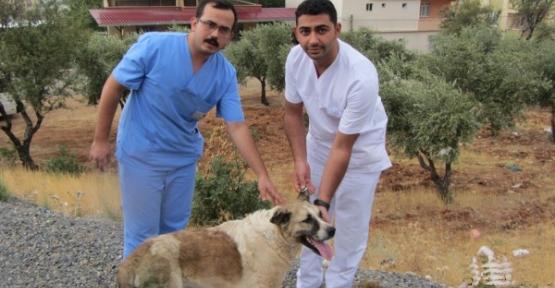 Sokak Köpeklerinin Teşhis ve Tedavileri Yapılıyor