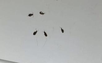 """Büyükşehir: """"Böcek istilası değil, mevsimsel hareketlilik"""""""
